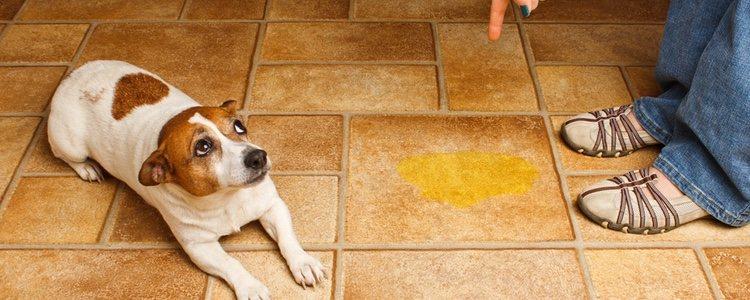 No se debe utilizar el castigo físico con el perro, eso hará que baje su autoestima