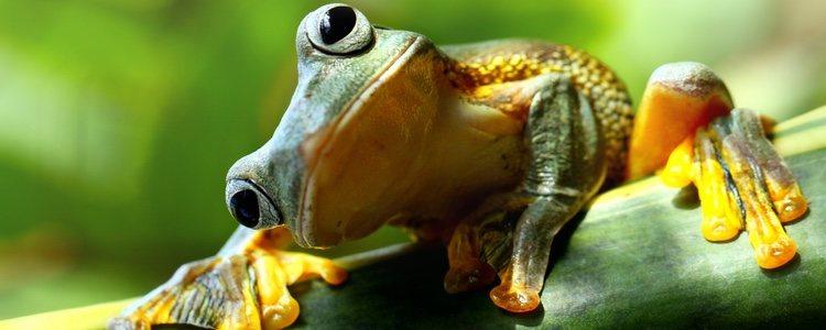 Este animal requiere de un ecosistema especial a diferencia de otras mascotas