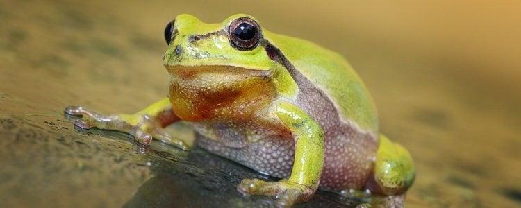 Es difícil saber el estado de ánimo de los anfibios porque son poco expresivos