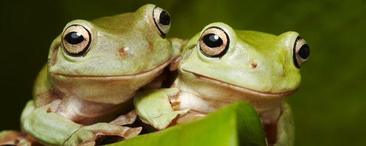 El acuaterrario es un recinto adecuado para las ranas que garantiza su salud y bienestar