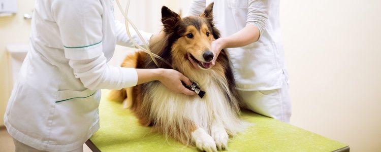 Desparasitarlo es uno de las soluciones para que nuestro perro vuelva a ser el de antes