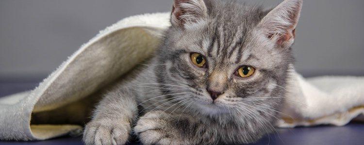 La calabaza y el calabacín pueden ayudar al animal a recuperarse de su salud intestinal