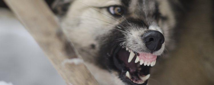 Es importante que nuestro perro pase una serie de revisiones y tenga sus vacunaciones en regla para evitar las enfermedades