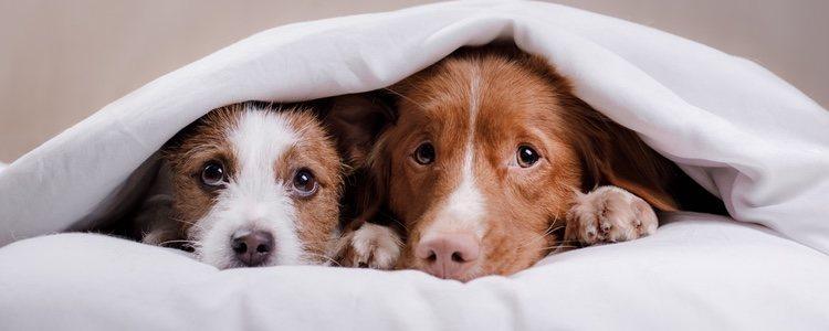 El juego del escondite con tu mascota es una buena opción en casa