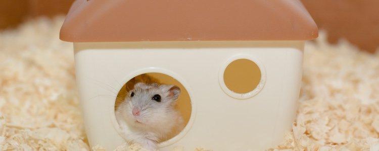 Los hámsters son una gran mascota siempre que tengas su jaula limpia y con comida y agua