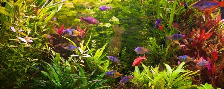 Las plantas de nuestro acuario ayudan a mantener el agua limpia y a equilibrar el oxígeno necesario