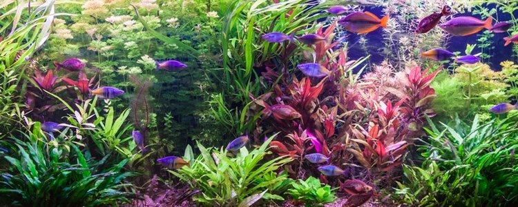 Hay que saber elegir cuidadosamente el tipo de planta que podemos incluir en nuestro acuario