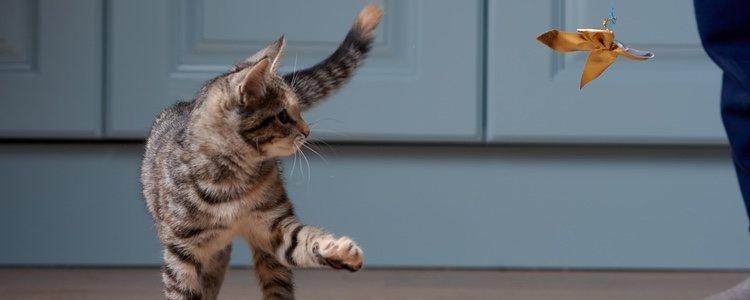 Los gatos son animales independientes, egoístas y con instinto cazador