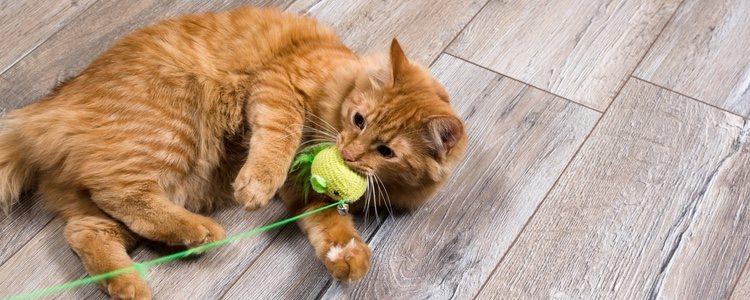Los gatos domésticos necesitan atenciones y juegos para estimular su inteligencia