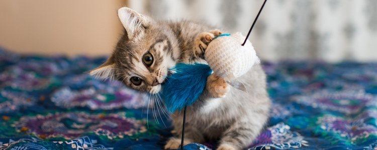 Hay numerosas formas de estimular la inteligencia de tu gato a la vez que juega o cuidas su salud