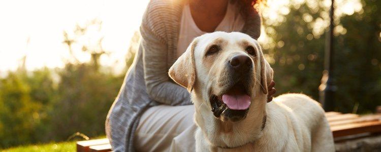 En la actualidad se desconocen los orígenes de muchas razas de perros