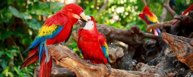 Es importante saber en qué lugar deben vivir estas aves para que no les falte de nada