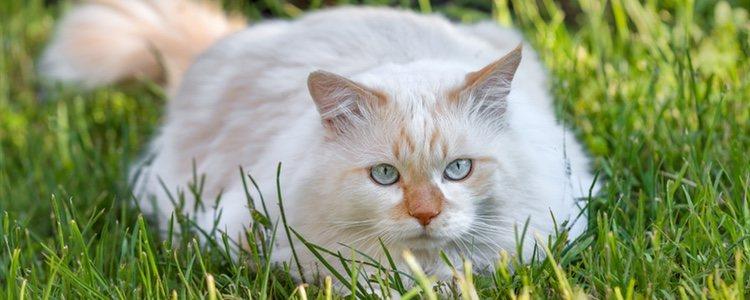 Existen piensos que contienen componentes que benefician al pelaje de tu gato