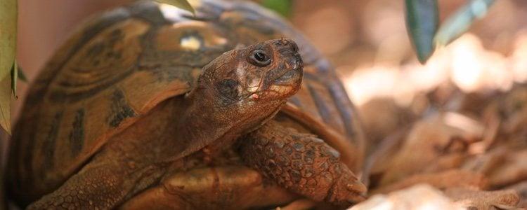 antibiótico para la infección del ojo de tortuga