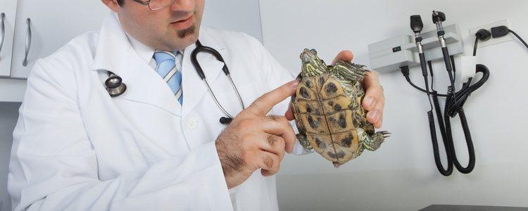 Ante cualquier duda lo mejor es acudir a un veterinario