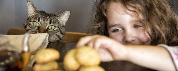 No podemos darle cualquier alimento a nuestro gato, y él tampoco querrá comer cualquier cosa