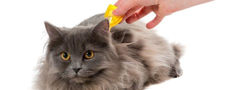 Existen pipetas y collares antiparásitos que ayudarán a que tu gato no tenga pulgas