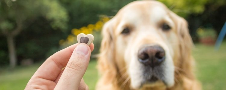Es importante que el animal sienta que lo está haciendo bien mediante una recompensa