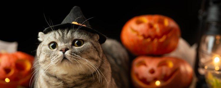 Uno de los complementos más sencillos y cómodos es un mini sombrero para tu mascota