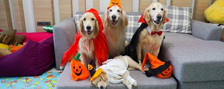 Existen multitud de opciones que permiten disfrazar a tu mascota en Halloween