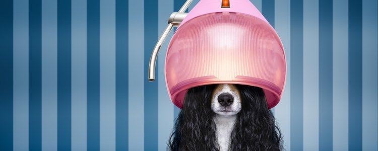 Para hacer una peluquería canina en casa necesitas paciencia, materiales y habilitar la zona