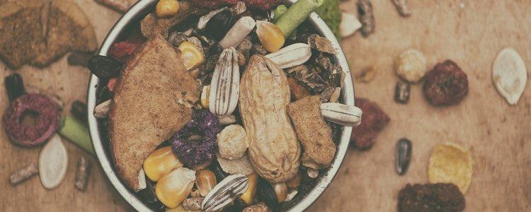 Las comidas de estos roedores pueden estar compuestas por diversos alimentos