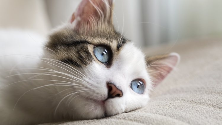 Aprende a cuidar de tu gato