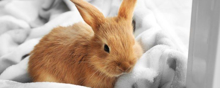 Los conejos mudan su pelaje cada 3 meses