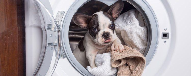 Las máquinas de lavado para perros son como lavadoras pero no dan vueltas
