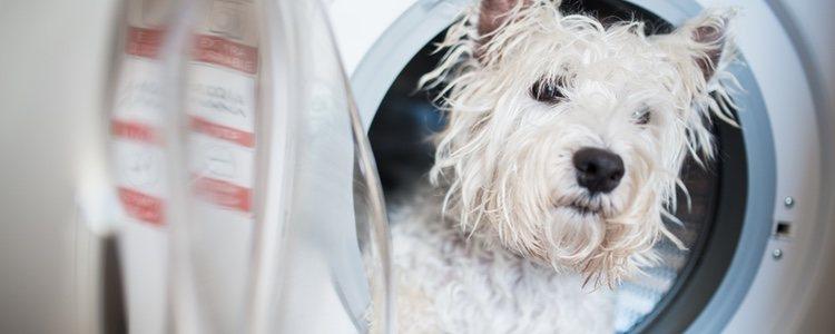 Las máquinas de lavado de perros solo disponen de productos de limpieza estándar