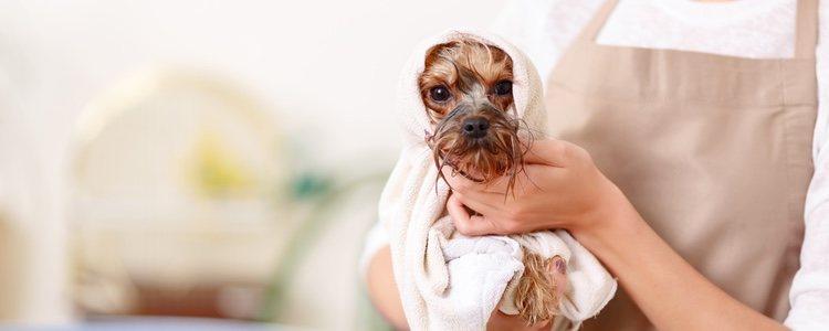 El secado a mano es mucho mejor que el que puede ofrecer una máquina de lavado de perros