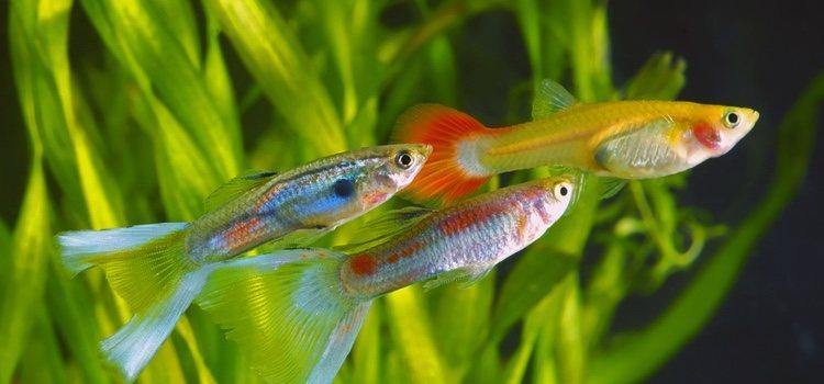 Sea cual sea tu tipo de mascota, vas a tener que cuidar aspectos como el tipo de acuario