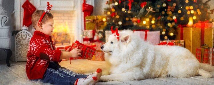 Muchas personas aprovechan esta época para incluir una mascota a su hogar