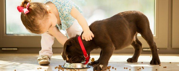 La persona a la que se regala debe de poder hacerse cargo del animal