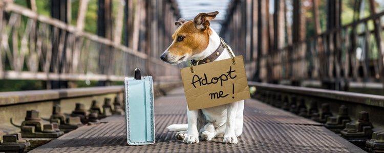 Existe la posibilidad de comprar o adoptar a la mascota