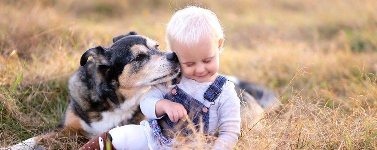 Es importante tener tiempo en el día a día para interactuar con el animal