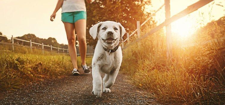 Existe una serie de señales que pueden darse en tu perro y a las que debes prestar atención