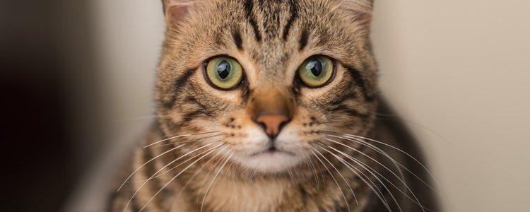 El cáncer es una de las principales causas de muerte en gatos, no solo en personas