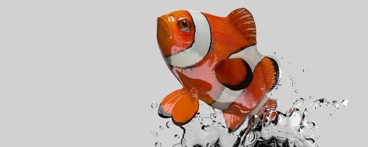 La temperatura del agua de la bolsa se adaptará a la del acuario
