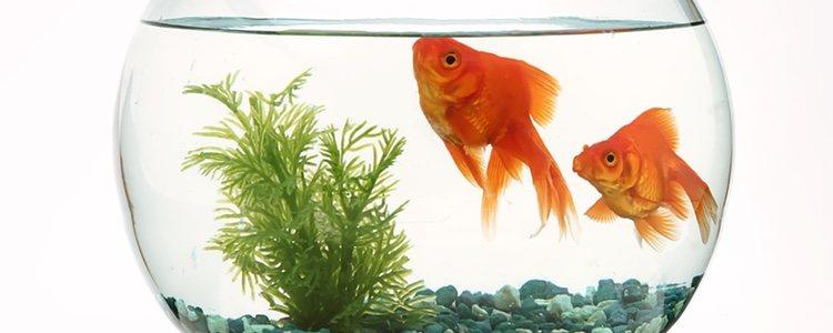 El recipiente donde se encuentren los peces deberá de ser resistente