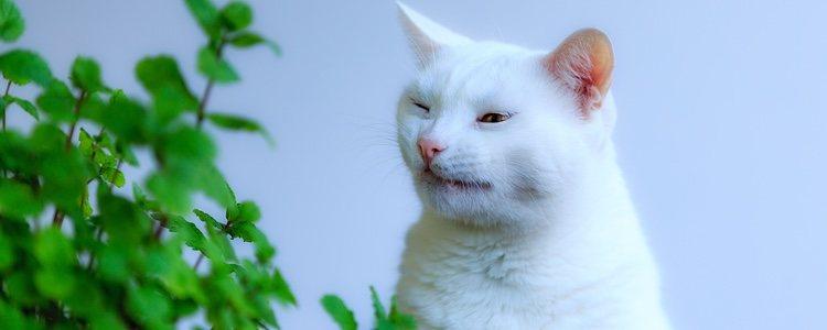 El gato estará enfermo si estornuda y tiene secreción nasal