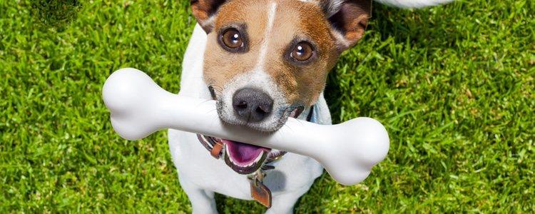 Encontrar juguetes mordedores variados para tu perro no será un problema