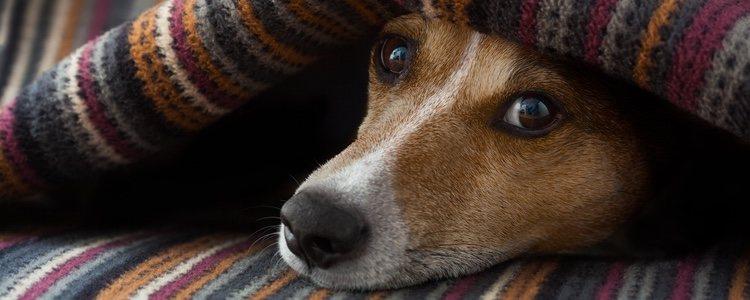 Si le regalas una manta a tu canino, seguro que no te la rechaza