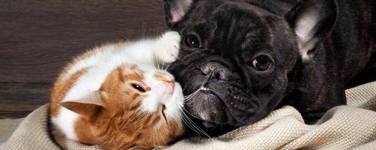 Los anticonceptivos para perros y gatos también tienen efectos secundarios