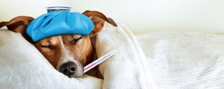 El lugar donde nuestro perro duerme debe estar muy limpio y libre de infecciones