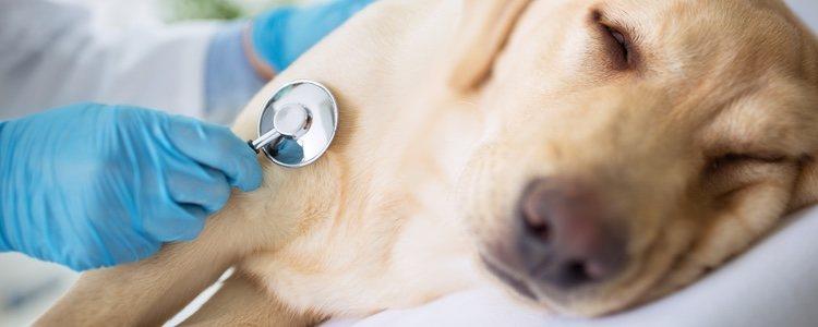 Se ha demostrado que podemos contagiarles algunas enfermedades como paperas o tuberculosis