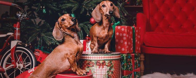 Las mascotas pueden verse atraídas por los adornos y las comidas navideñas