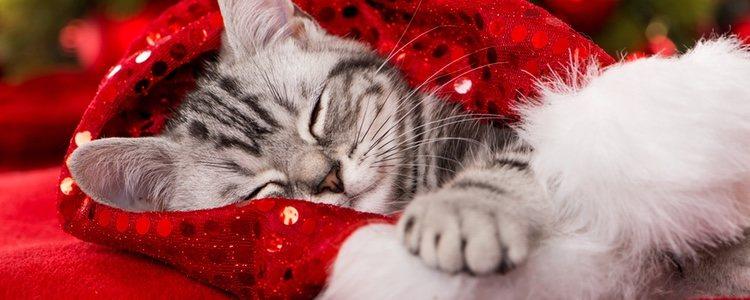 Lo esencial es seguir con la rutina de la mascota a pesar de que sean fechas navideñas
