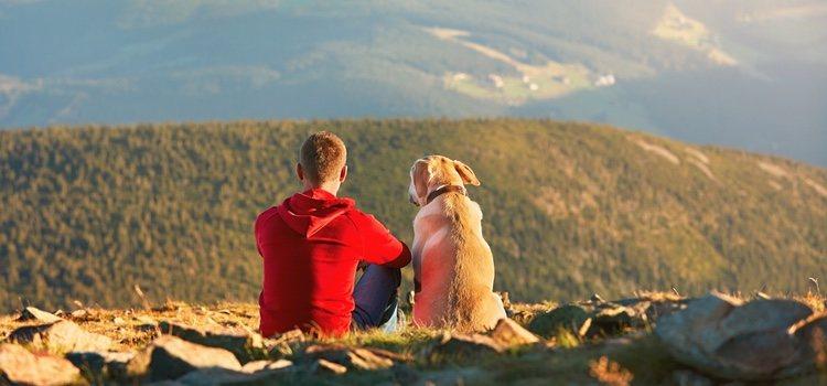 El senderismo es una actividad perfecta para realizar con perros