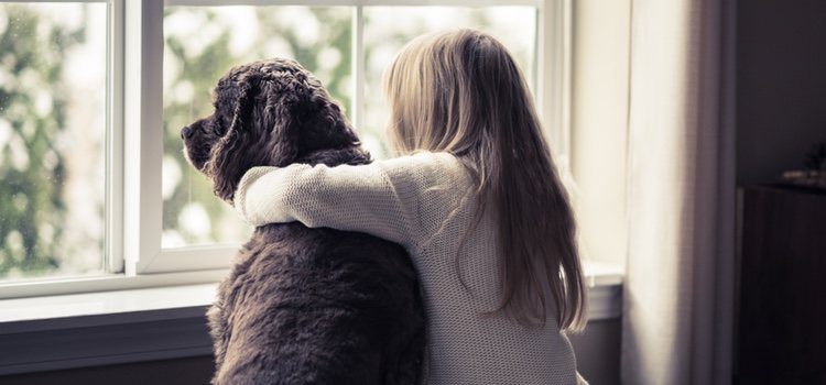 Hay muchos hoteles que permiten el alojamiento con perros